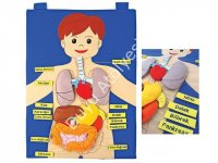 Kumaş Eğitim Panosu Organlar